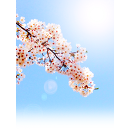 桜花 サムネイル